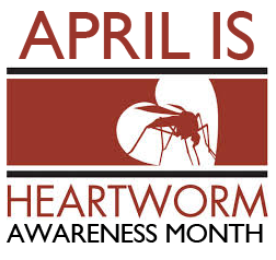 Image result for heartworm prevention month