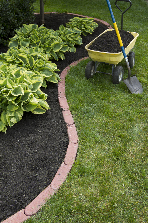 Dick 39 s garden blog tips for a beautiful lawn wells - Tips for a lovely garden ...
