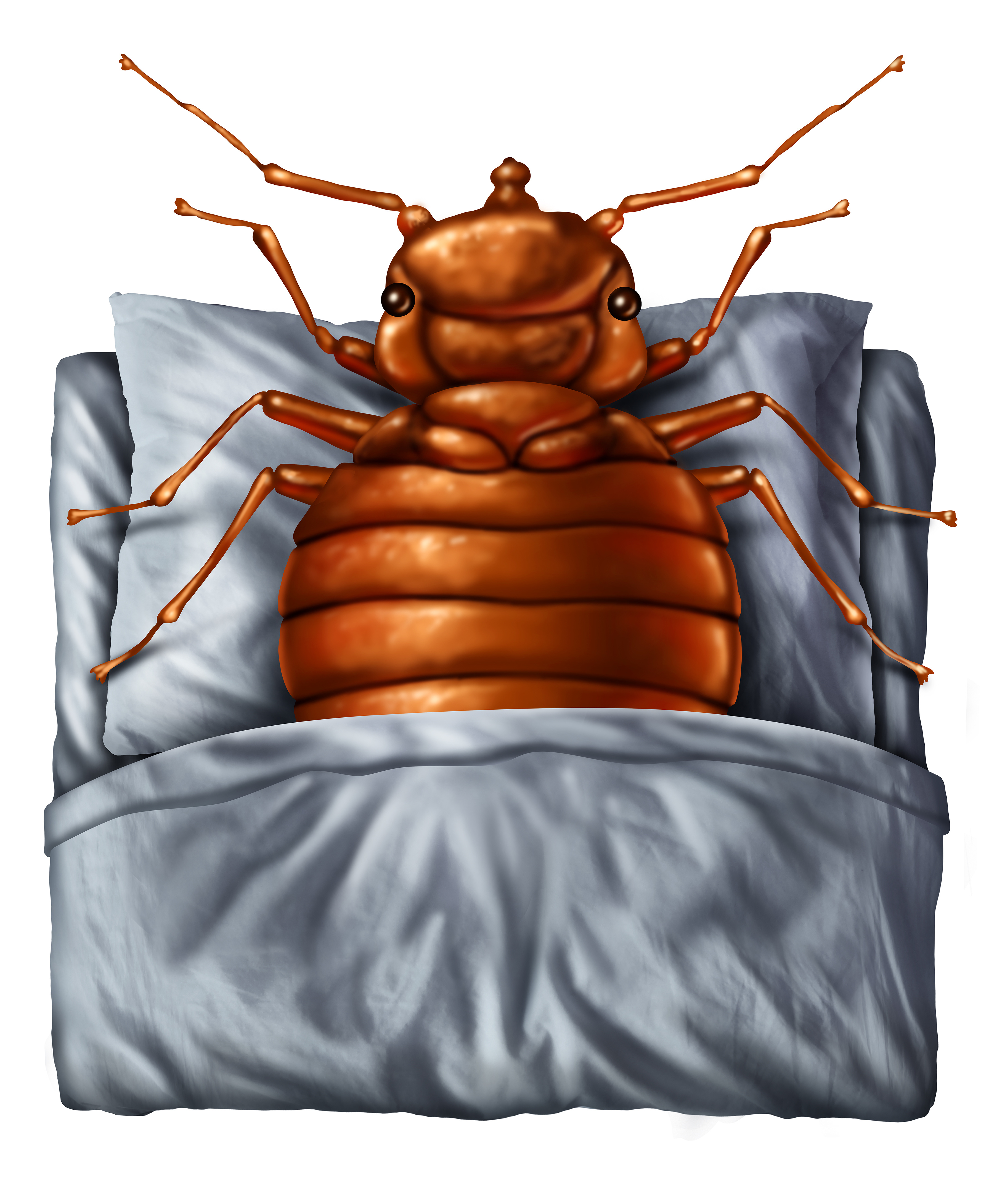 what with hate all bugs do come to regard bug where facts does bed from cinnamon why house begone the