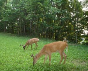 """Wells Brothers has put together a """"Build Your Own Food Plot Mix"""" section. This allows hunters to buy food plot seed by the pound."""