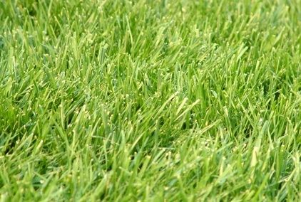 Overseeding your lawn with rye grass seed from Wells Brothers in Plano, TX
