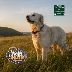 nutri source grain free dog food