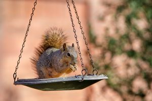 Squirrel eating seeds from a bird feeder