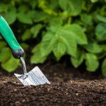 when to plant fall gardens