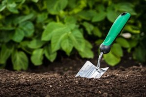 Add amendments to your dirt to turn it into nutrient rich soil.