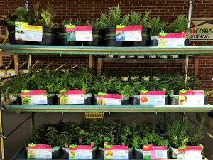 Every gardener should plant herbs, including parsley, sage, rosemary, and thyme. Pick up your herb plants at Wells Brothers, Pet, Lawn and Garden Center in Plano, TX.