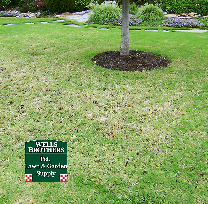 controlling grubs in the lawn