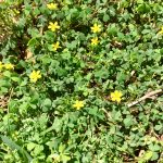Perennial Weed Control Tips