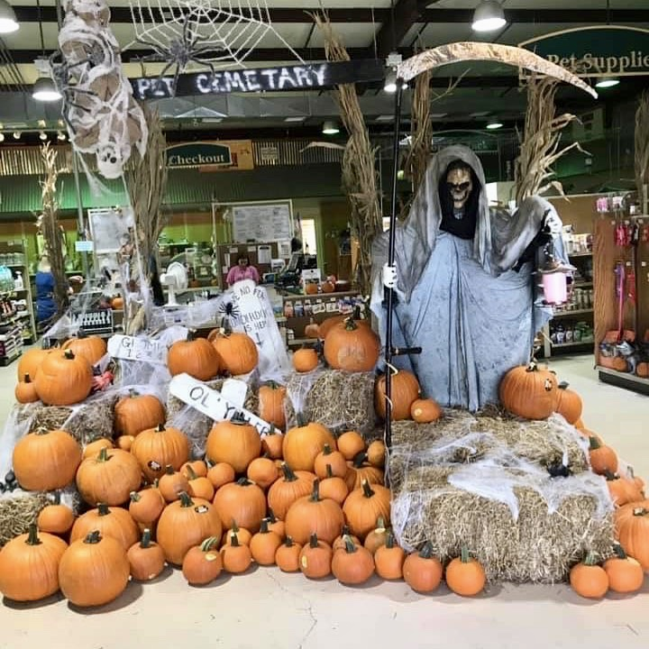 Pumpkin Porch at Wells Brothers Pet, Lawn, and Garden Center in Plano, Texas.