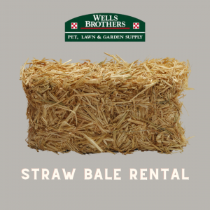 Straw Bale Rental Program At Wells Brothers Pet, Lawn & Garden Supply in Plano, Texas.
