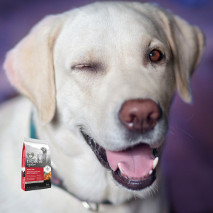Save on Exclusive Dog Food, Chicken and Rice Adult formula with Comfort Care, in May at Wells Brothers!
