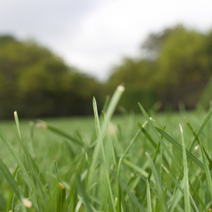 Bermuda Grass Seed at Wells Brothers Pet, Lawn, and Garden Center.
